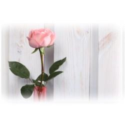 Tischset rosa Rose