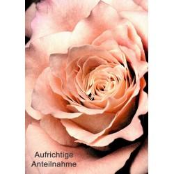 Anteilnahme Rose orange-schwarz