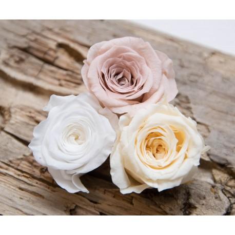 stabilisierte Rose S, weiss