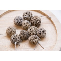 Ballfrucht, 2 - 3 cm, 10er Set