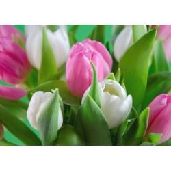 Tischset Tulpen weiss-rosa