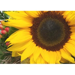 Tischset Sonnenblume