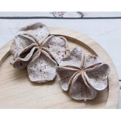 Landlotos Blüten 8 - 12 cm