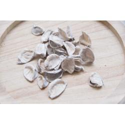 Baumwollpods-Stücke, 10 Stück