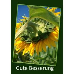 Gute Besserung Sonnenblume