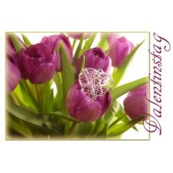 Valentinstag Tulpe violett