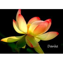 Danke Lotusblüte
