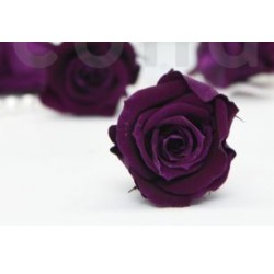 stabilisierte Rose Kiara samt violett