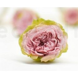 stabilisierte Rose rosa-grün