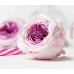 stabilisierte Rose violett
